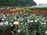 kugahara150813-2.jpgのサムネイル画像